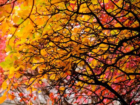 In this photo the beautiful autumn wood is shown