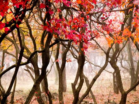 In this photo the beautiful autumn wood is shown photo