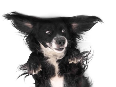 this is a black dog on a white background Imagens - 615414