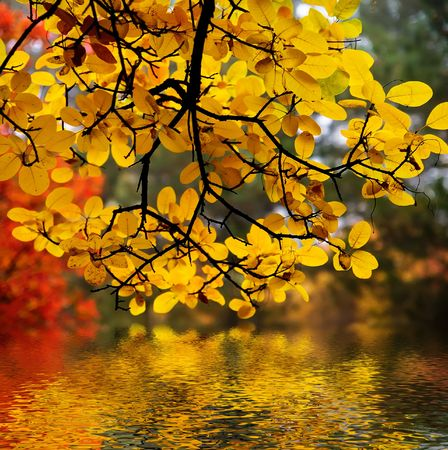 In this photo the beautiful autumn wood is shown Stock Photo - 632073