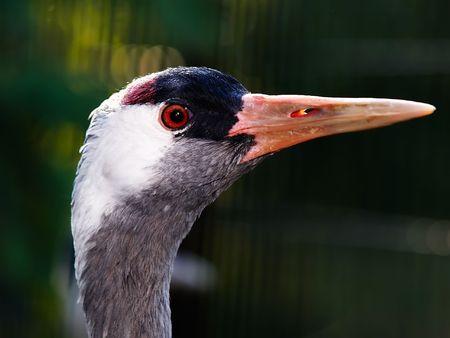 bird on a dark background photo