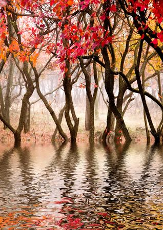 In this photo the beautiful autumn wood is shown Imagens - 635396
