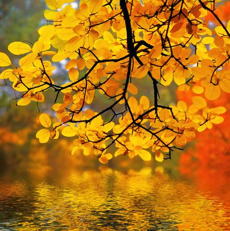 calmness: In this photo the beautiful autumn wood is shown