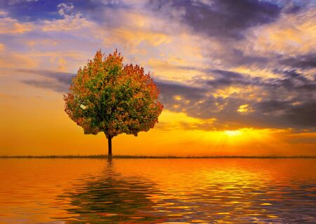 Autumn tree on a background of a beautiful decline Imagens