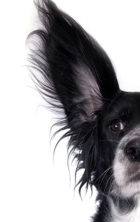 this is a black dog on a white background Stock Photo - 677002
