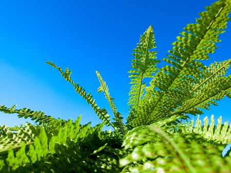 fern on a background blue sky photo