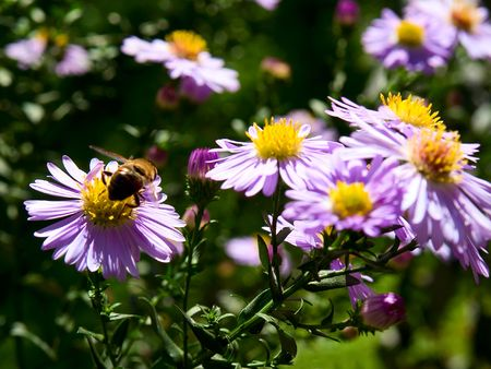 Flowers and bees photo