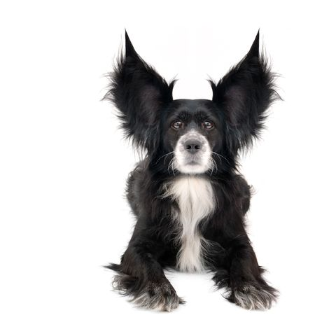 this is a black dog on a white background Imagens - 832218