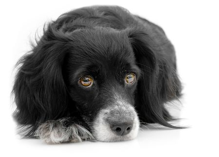 dog days: perro en un fondo blanco