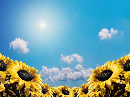 Sunflower on a sky background photo