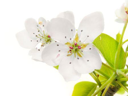 flower tree Imagens