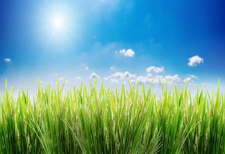 green grass on a sky background Imagens - 883226