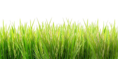 green grass on a white background Imagens - 883227