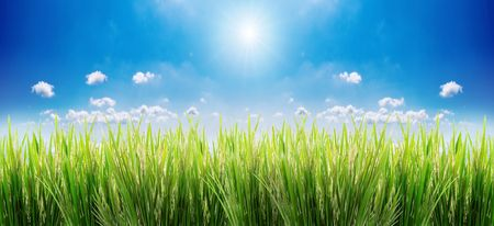 green grass on a sky background Imagens - 903879