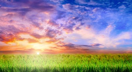 green grass on a sky background Imagens - 903886
