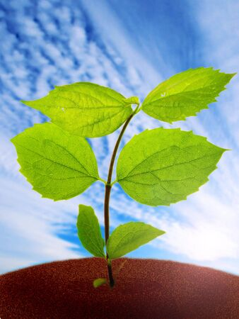 green plant on a sky background Imagens - 903889