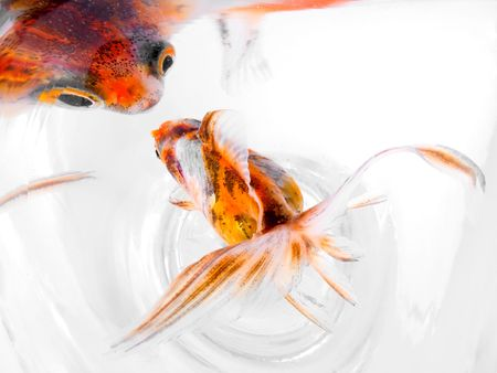 goldfish Stock Photo - 910705