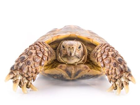 Turtle on a white background  photo
