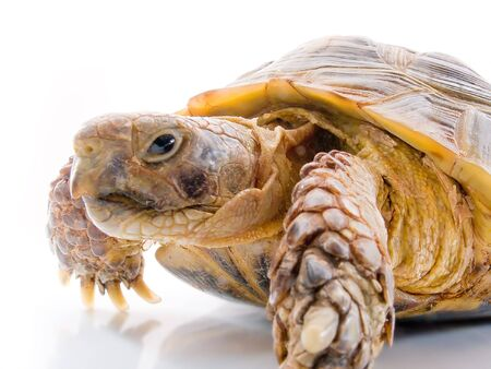 Turtle on a white background Imagens - 914079