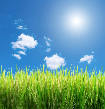 green grass on a sky background Imagens - 930901