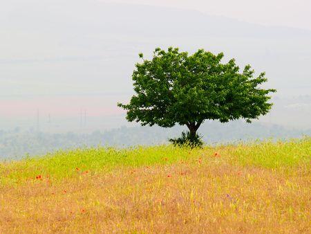 lonely tree Stock Photo - 970350