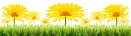 turf flowers: green grass and yellow flower on a white background
