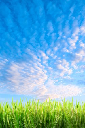 green grass on a sky background Imagens - 970369