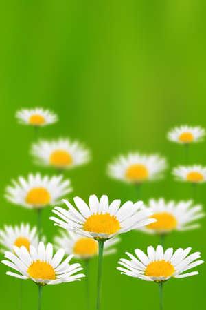 flower Imagens - 1006664
