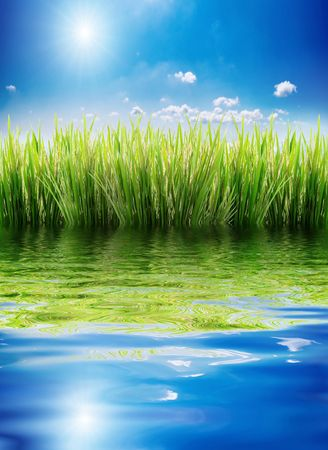 green grass on a sky background