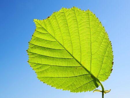 green leaf Stock Photo - 1064871