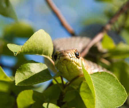 orange snake: snake