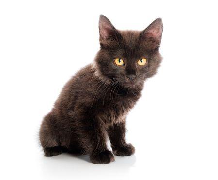 prestar atencion: gato negro sobre fondo blanco