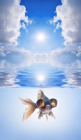 white sunset and black fish 版權商用圖片