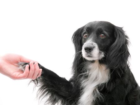 The dog gives a paw in a hand Imagens - 1253908