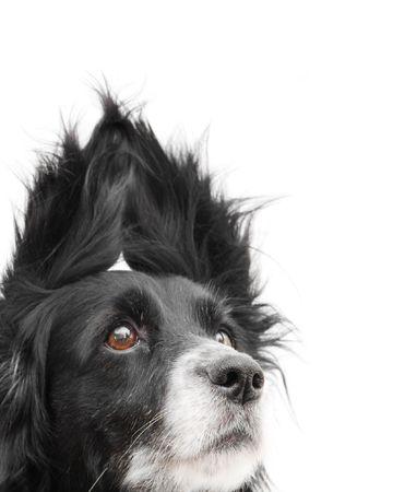 dog on a white background photo