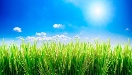 green grass on a sky background Imagens - 1319057