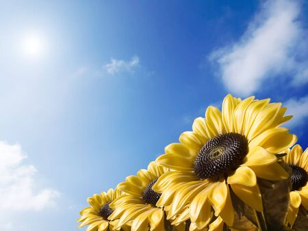 Sunflower on a sky background Imagens - 1319056