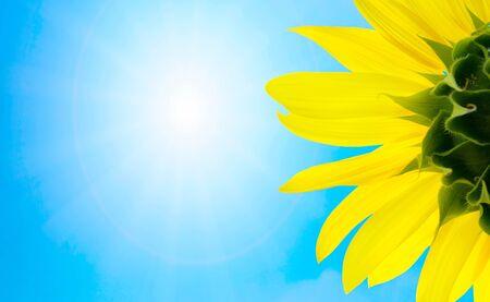 sunflower Stock Photo - 1365409
