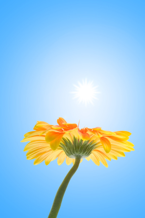 flower on a sky background Stock Photo