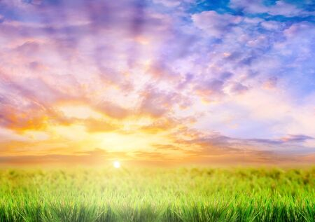 green grass on a sky background photo