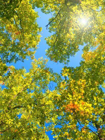 contryside: autumn leaf Stock Photo