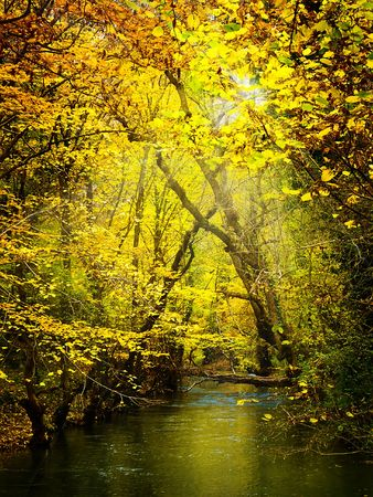autumn leaf Stock Photo - 1797507
