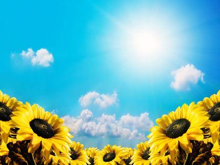 stamen wasp: Sunflower on a sky background