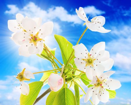 flower tree on a sky background photo