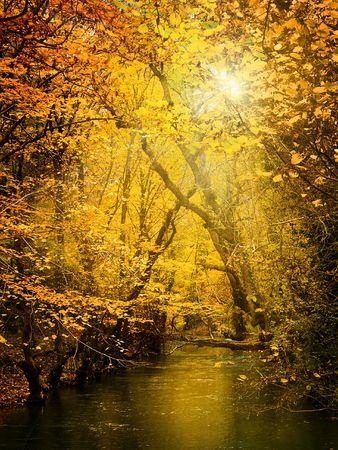 autumn leaf 版權商用圖片