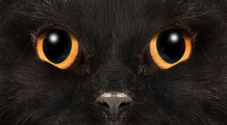 black cat 版權商用圖片