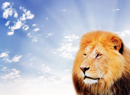 lion on a sky background Imagens