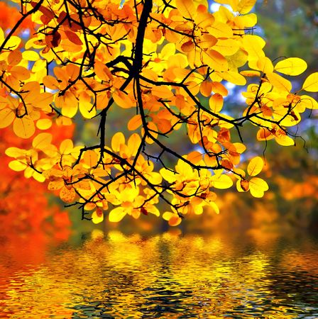 In this photo the beautiful autumn wood is shown  Stock Photo