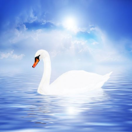 birds lake: Beautiful white swan on a sky background.  Stock Photo