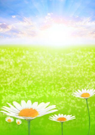 flower Stock Photo - 2612815